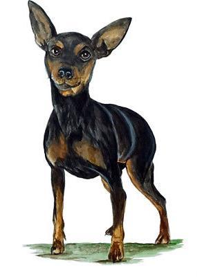 mini pinscher dog sticker decal quality helmet